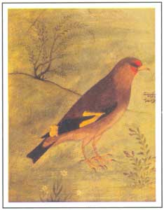 Mughal Miniature - Study of Bird, Artist; Mansur, circa 1620 AD, National Museum, New Delhi